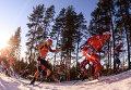 Биатлонисты на дистанции